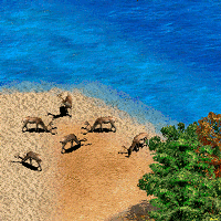 Team Islands